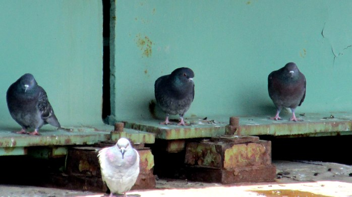pigeons on bridge supports