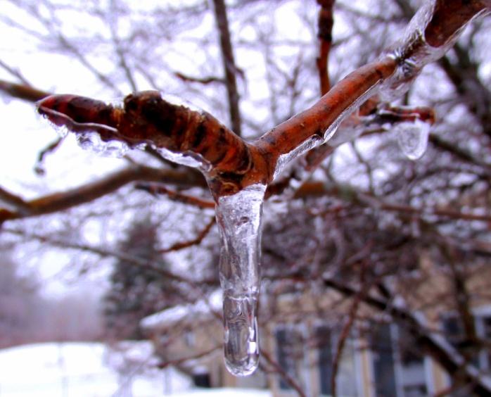 ice in apple tree