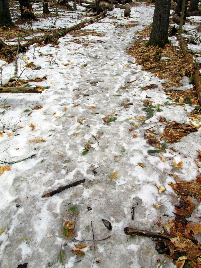 ice on wooded trail