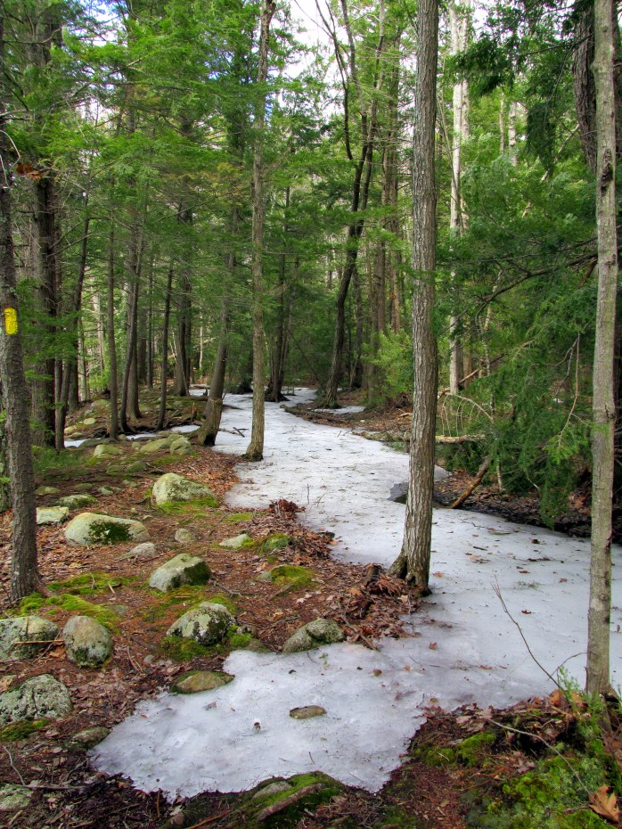 icy wooded trail