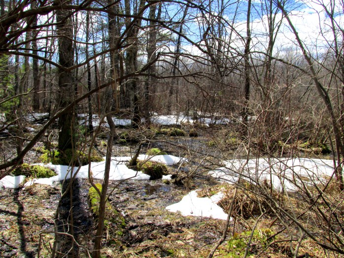swampy area