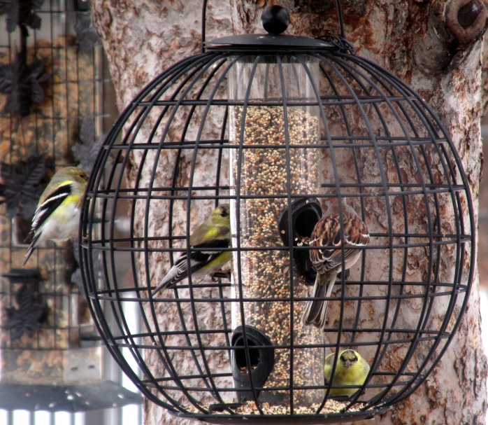 three goldfinches and a sparrow in finch feeder