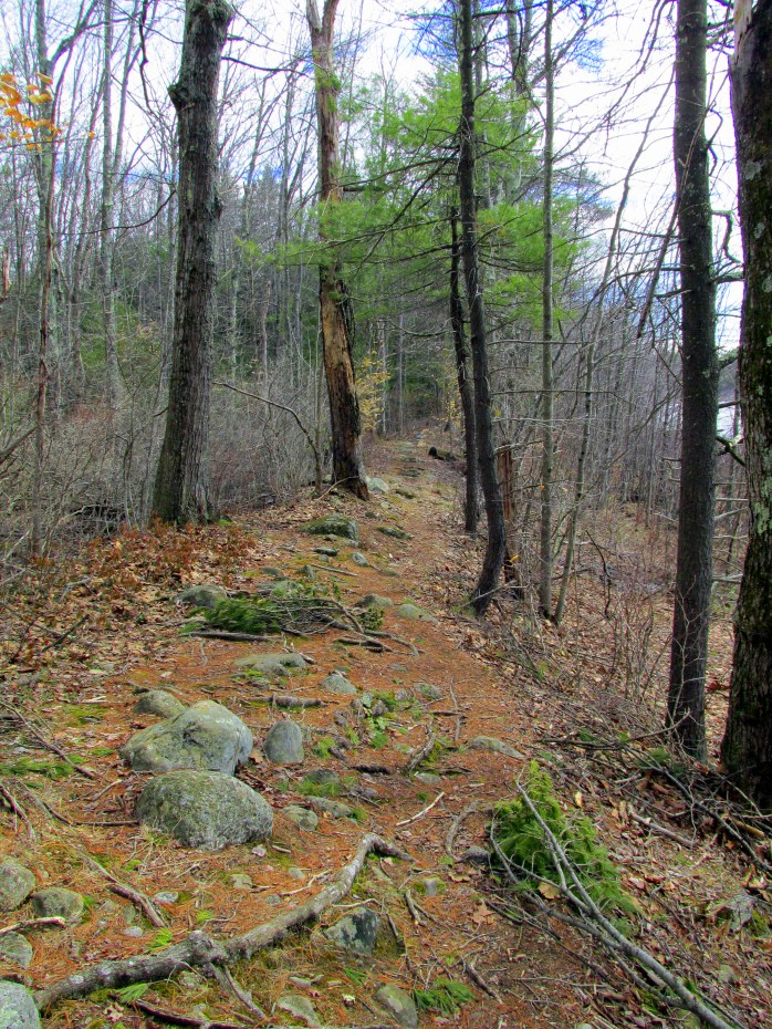 trail along ridge with rocks and roots