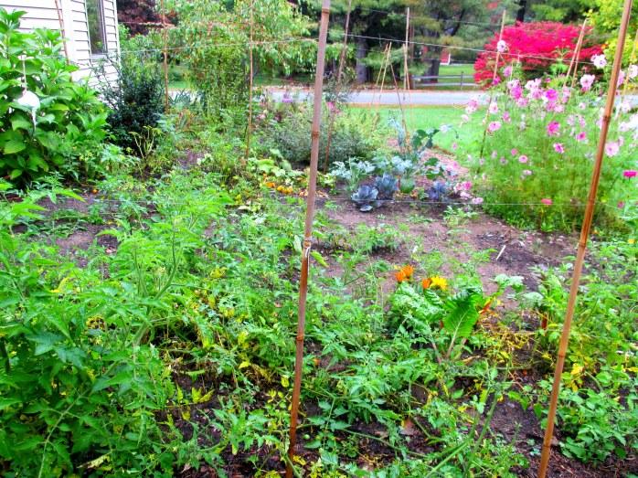 vegetable garden, early Oct. 2014