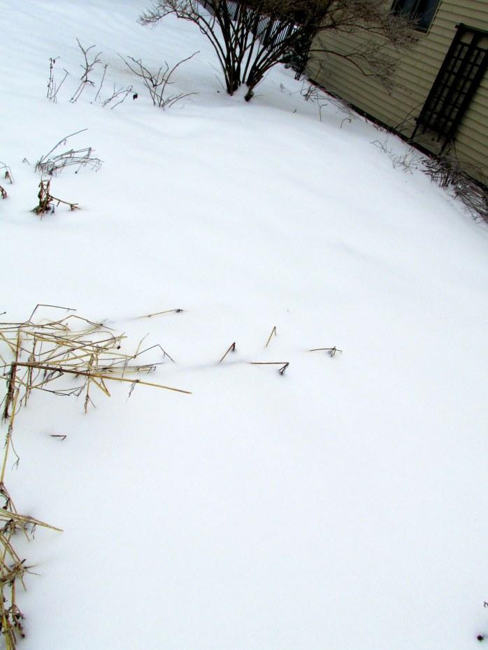 vegetable garden under snow