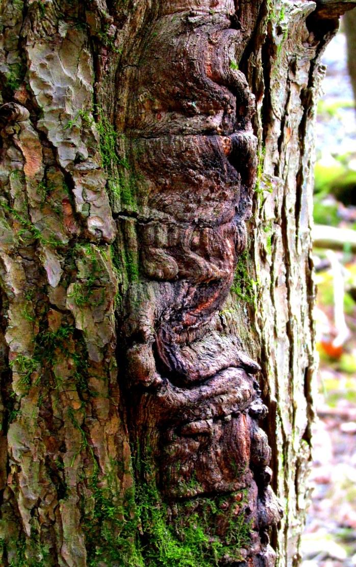 black ash bark