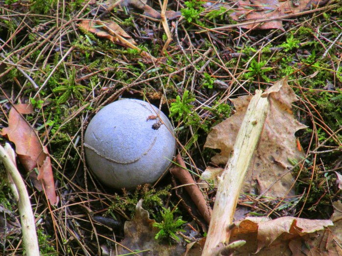 denuded tennis ball in swamp