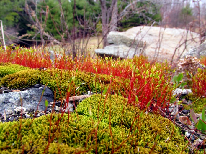 mosses on rocks