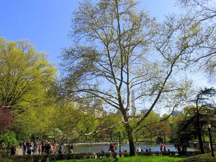 pondtreesCentralParkNYC2May2015