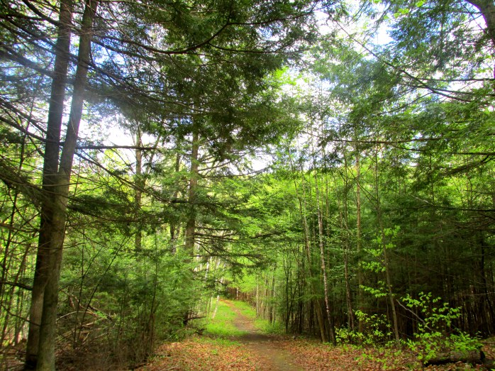 trailtreesskyLHCA13May2015
