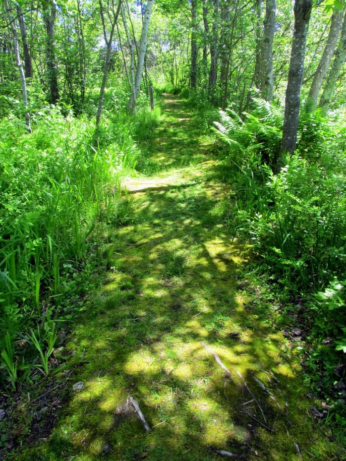greengrassytrailLaudholmWellsME20June2015