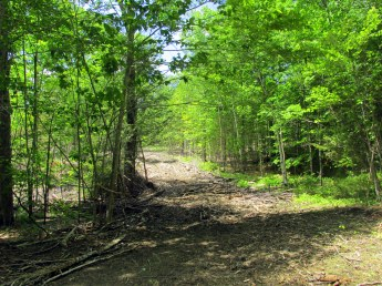 water protected while logging, 6 June 2015