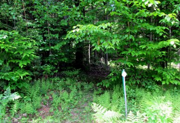 marked path back into woods, 6 June 2015