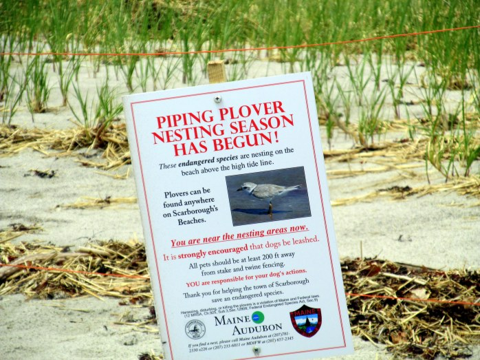 sign to keep dogs away from plover nesting