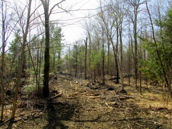 protecting brook from logging, 6 May 2015