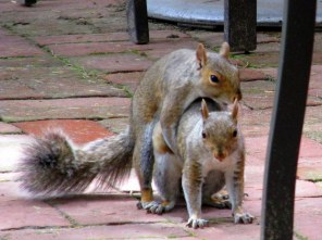 squirrelsexCcafeLongwoodGardens23June2015