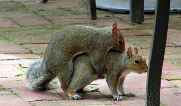 squirrelsexDcafeLongwoodGardens23June2015