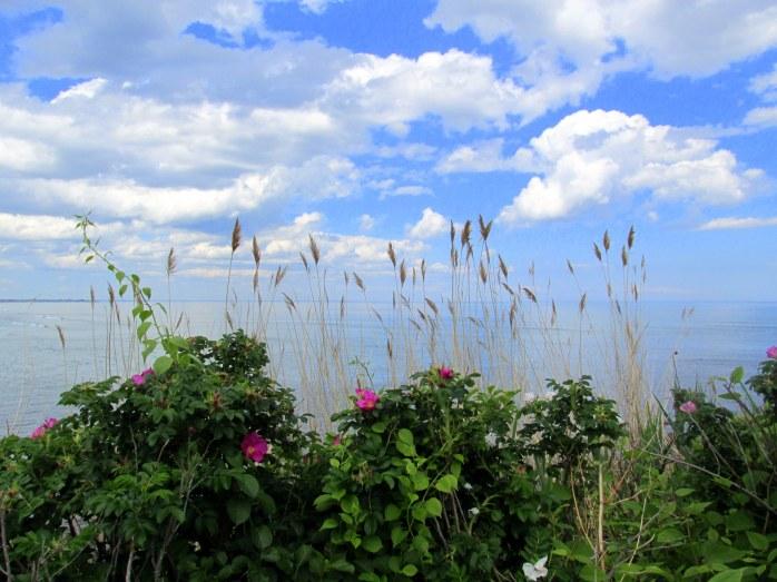 viewoceanthrugrassesrosesMarginalWayOgtME19June2015