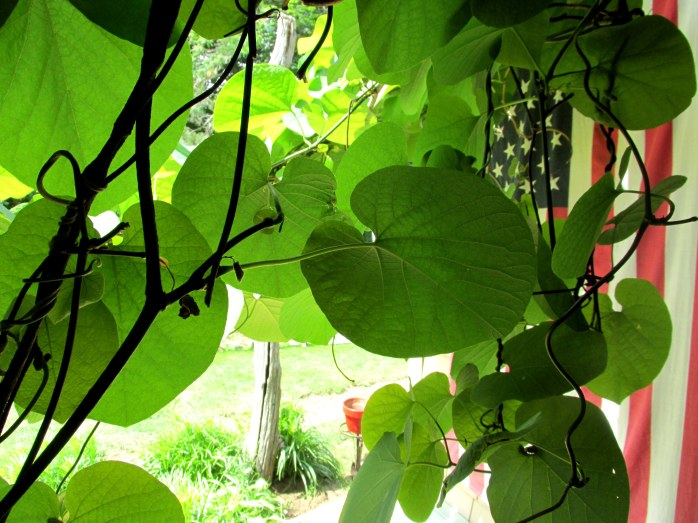 vine on porch and flag