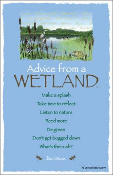 advicefromawetland