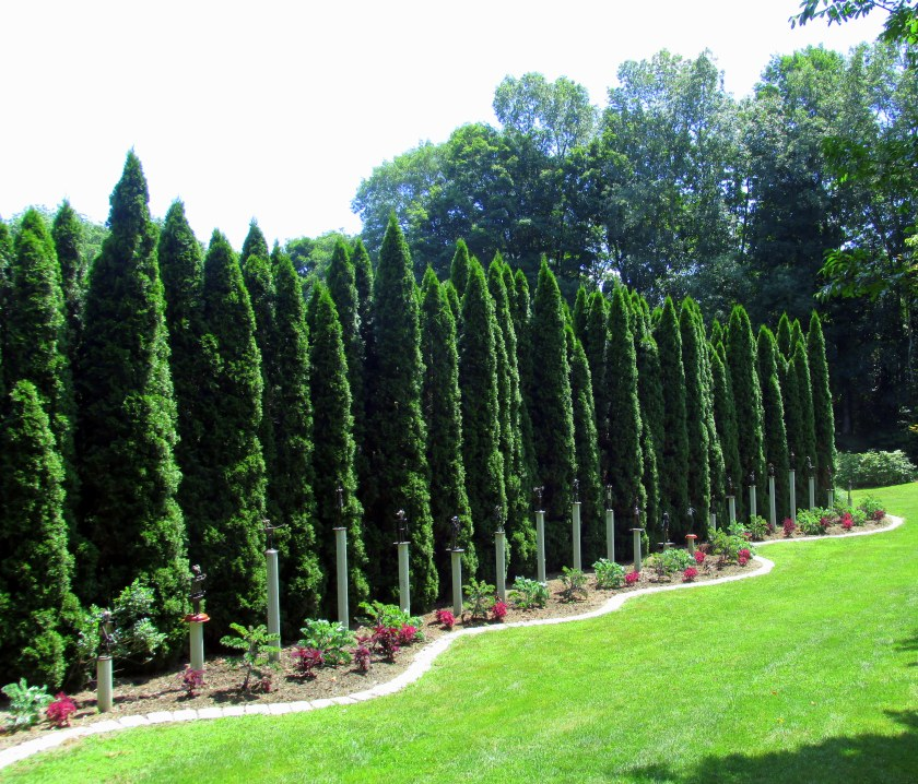 arborvitae hedge with kales, coleus, small sculptures on pedestals