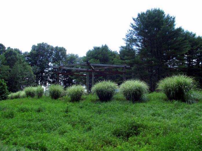 grasses and pergola