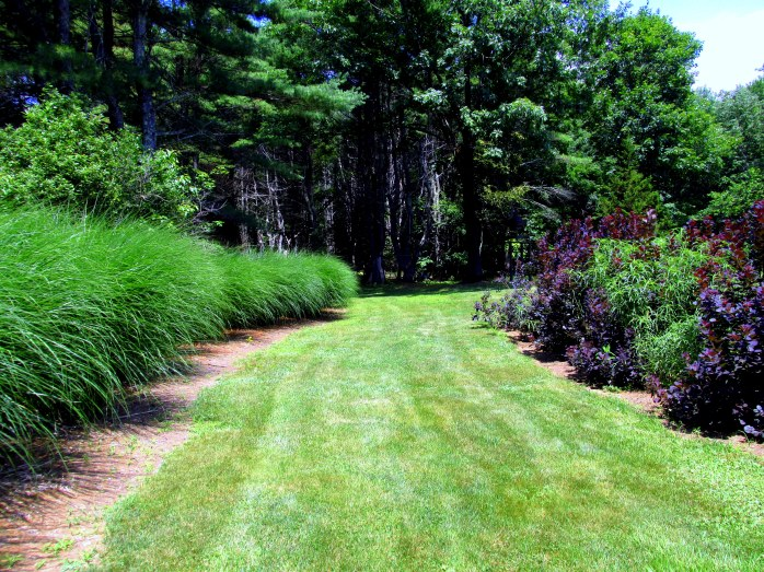 grasses, smoke bushes