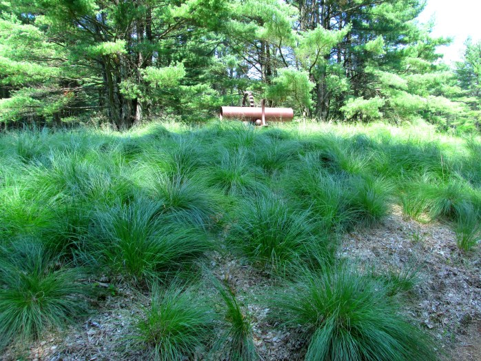 fescue and sculpture along outer path