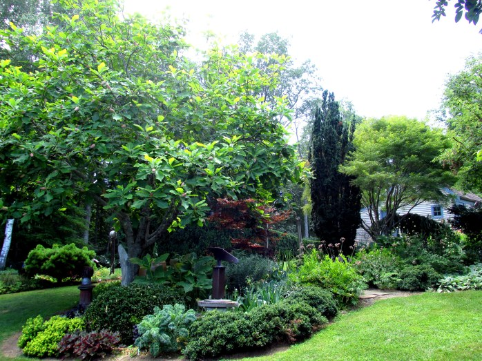 plantings with chestnut tree near house