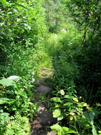 narrowgrassytrailCohosTrailPittsburghNH8July2015