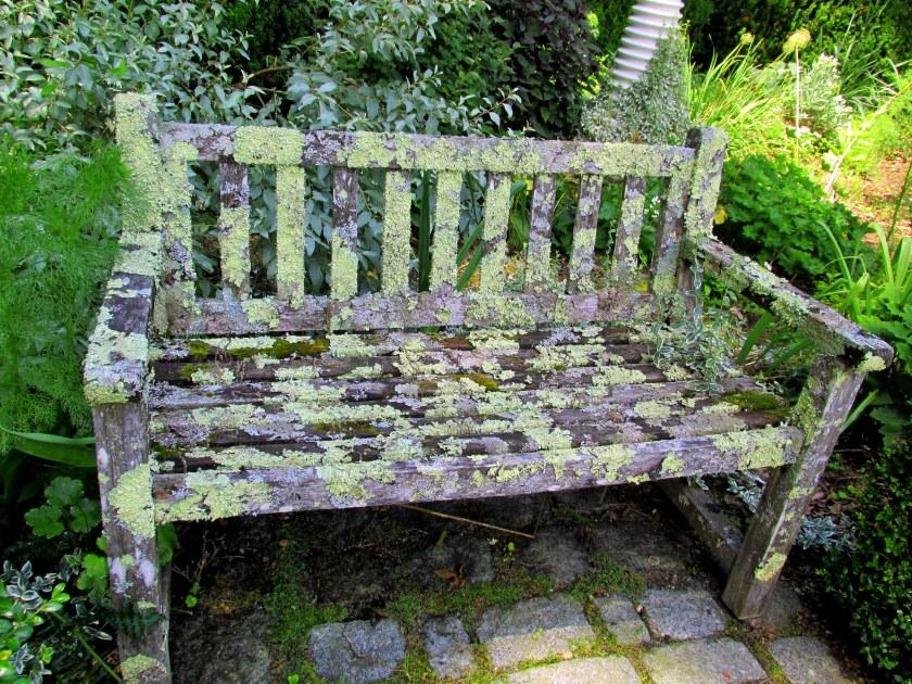 lichenised bench
