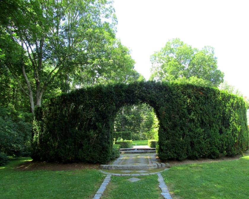 yew hedge