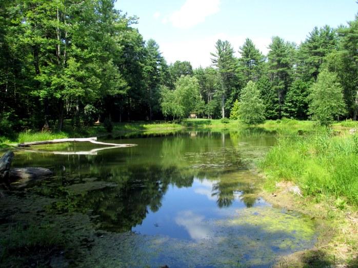 pond view to Termi