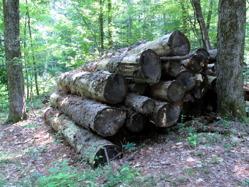 some of many large logs, woods path