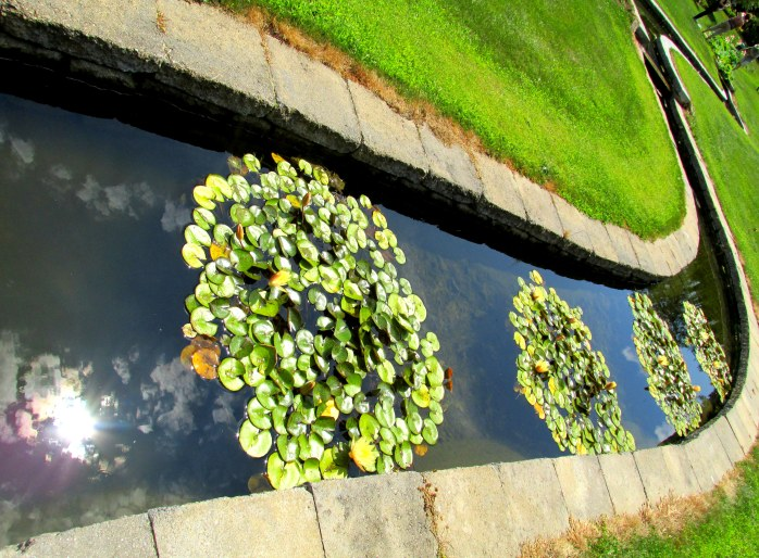 Wiggle Waggle, reflections