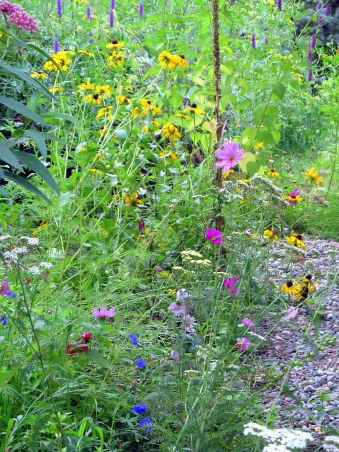 butterfly seed mix - rudbeckia, crimson clover, cosmos, etc.