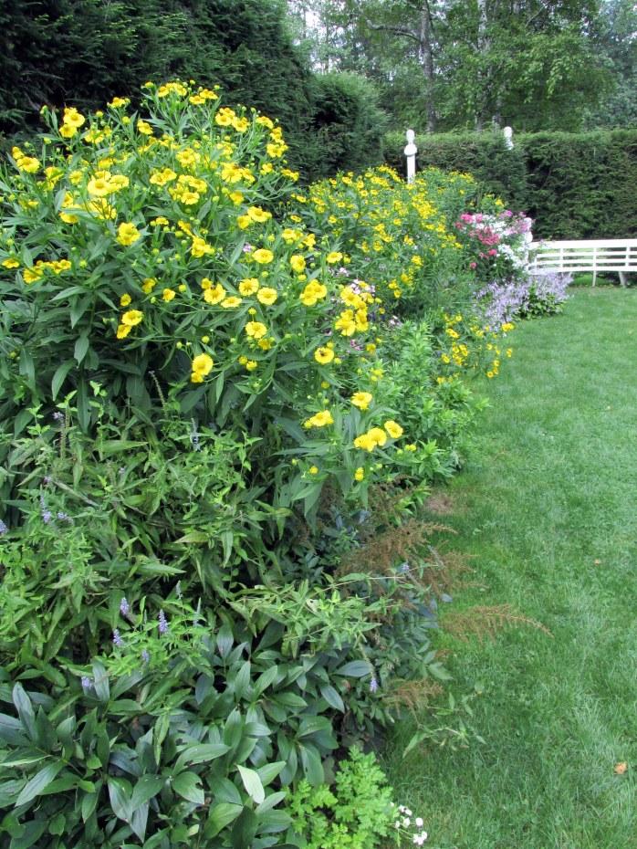 formalgardenwithcupplantsSilphiumPerfoliatumStGaudens23Aug2015