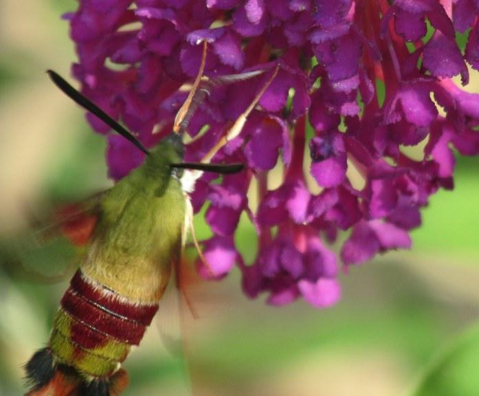 less moth but a bit clearer