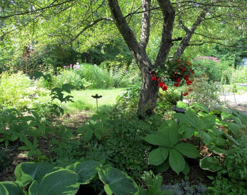 shade garden with hanging begonia