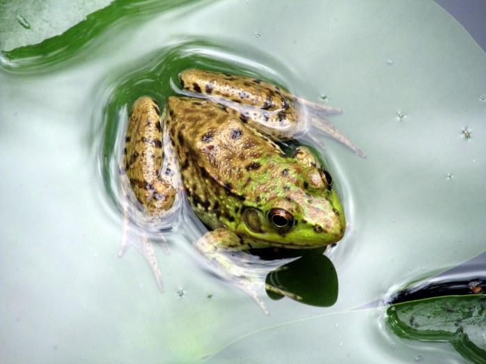 frog in sculpture gallery