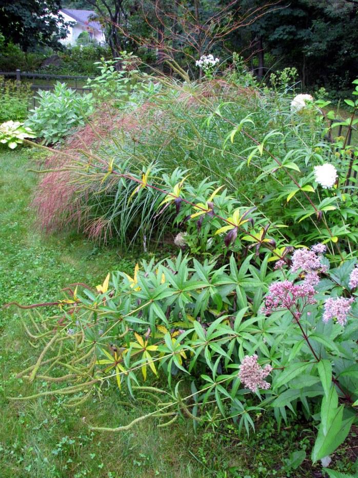 back border with veronicastrum, Joe Pye weed, panicum grass