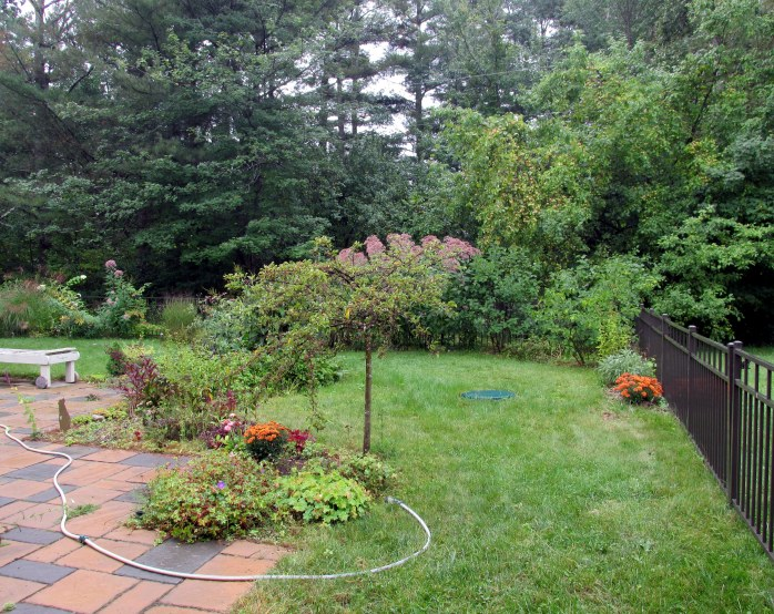 partial back yard view with 'Tina' crabapple