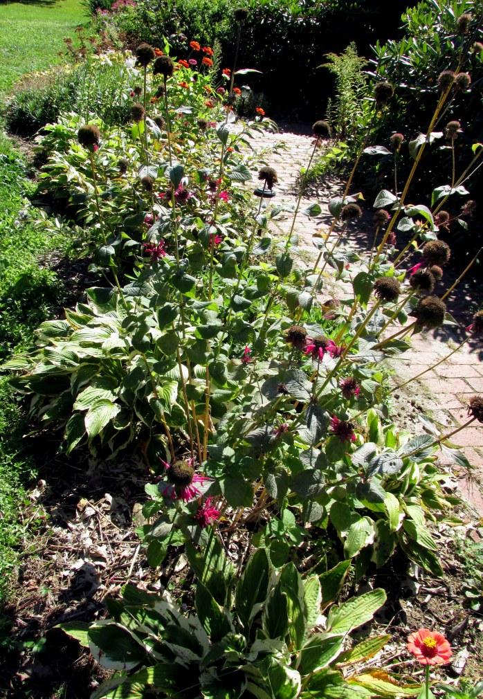 front walkway, with bee balm, zinnias, hostas, etc.