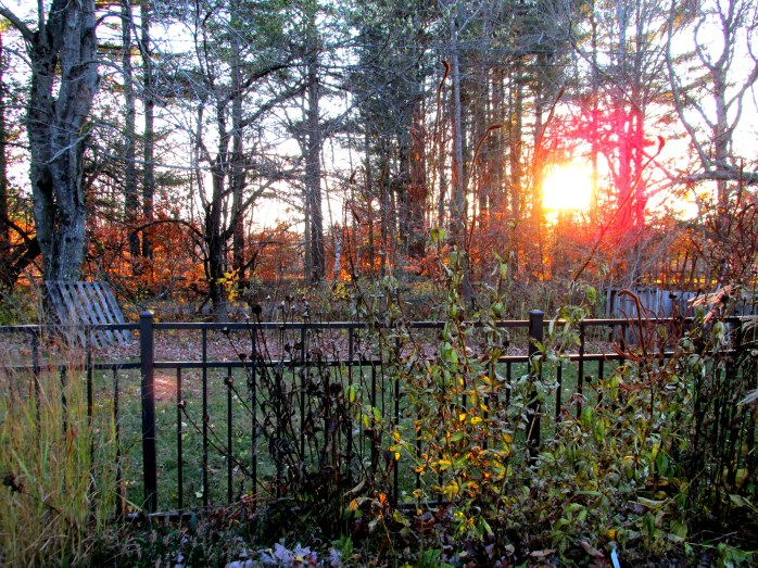 backborderfencecompostsunset5Nov2014