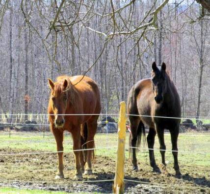 horses, April 2015