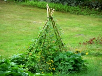 bean tepee, July 2012