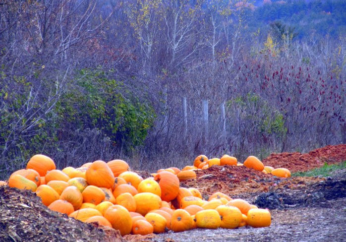 discarded pumpkins, West End Farm Trail, Concord, NH, Nov. 2014