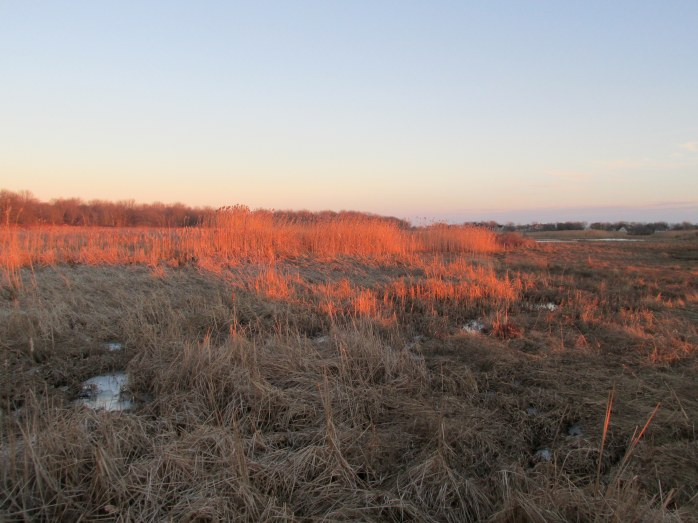 grasses, late afternoon, Laudholm Farms, Wells, ME. 29 Dec 2014