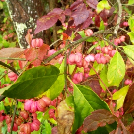 huckleberry, 29 Sept 2012