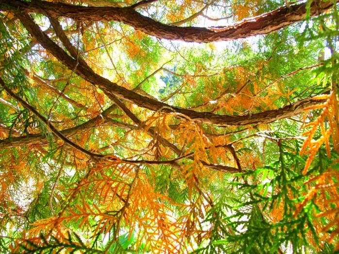 underneath a cedar